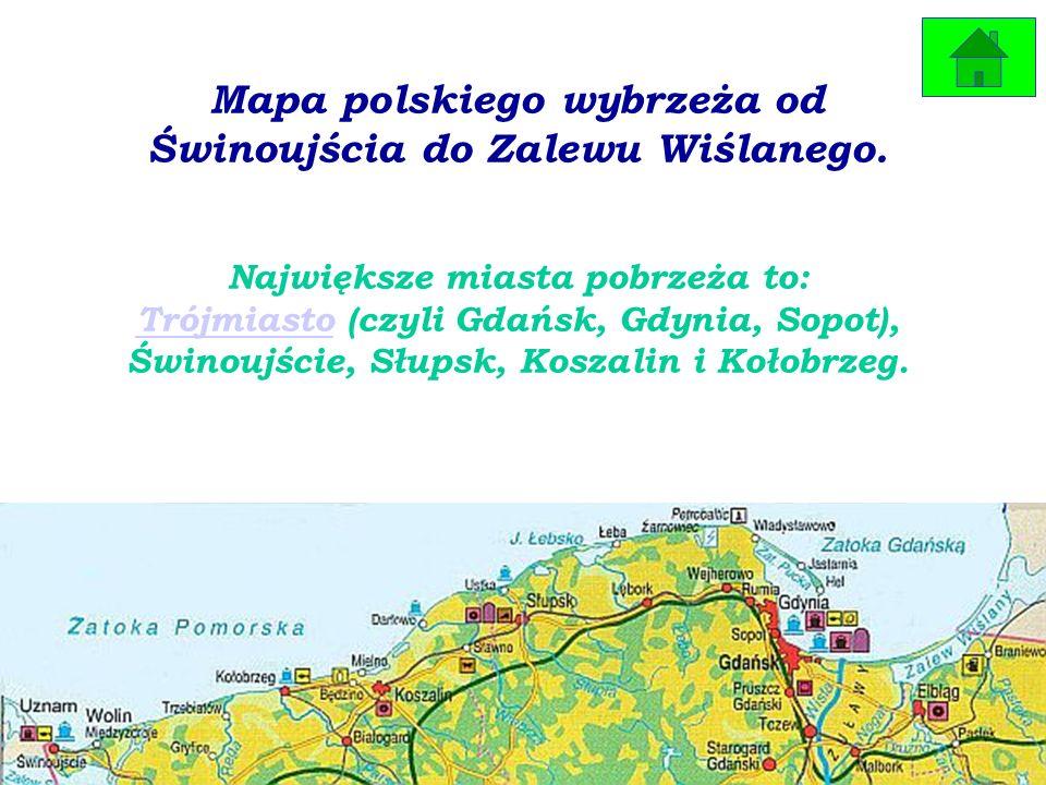 Foki szare są ssakami, występują nad Morzem Bałtyckim