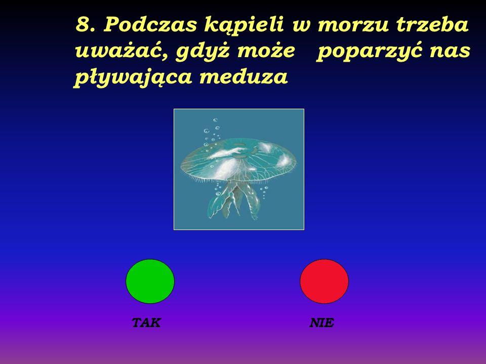 7. W Bałtyku poławia się śledzie, sardynki, pyszne makrele i wiele innych ryb TAKNIE