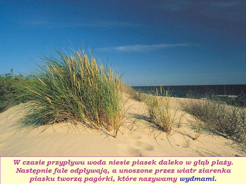 W czasie przypływu woda niesie piasek daleko w głąb plaży.