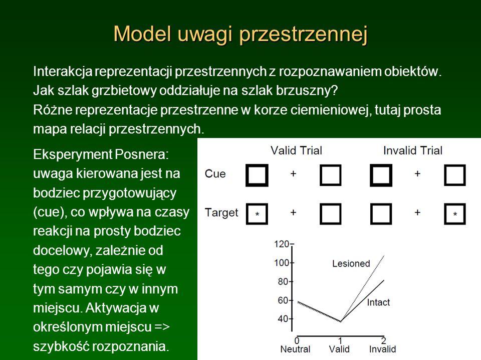 Model uwagi przestrzennej Interakcja reprezentacji przestrzennych z rozpoznawaniem obiektów. Jak szlak grzbietowy oddziałuje na szlak brzuszny? Różne