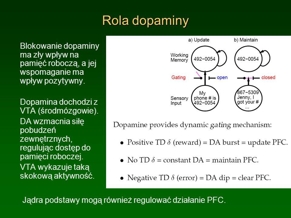 Rola dopaminy Blokowanie dopaminy ma zły wpływ na pamięć roboczą, a jej wspomaganie ma wpływ pozytywny. Dopamina dochodzi z VTA (środmózgowie). DA wzm