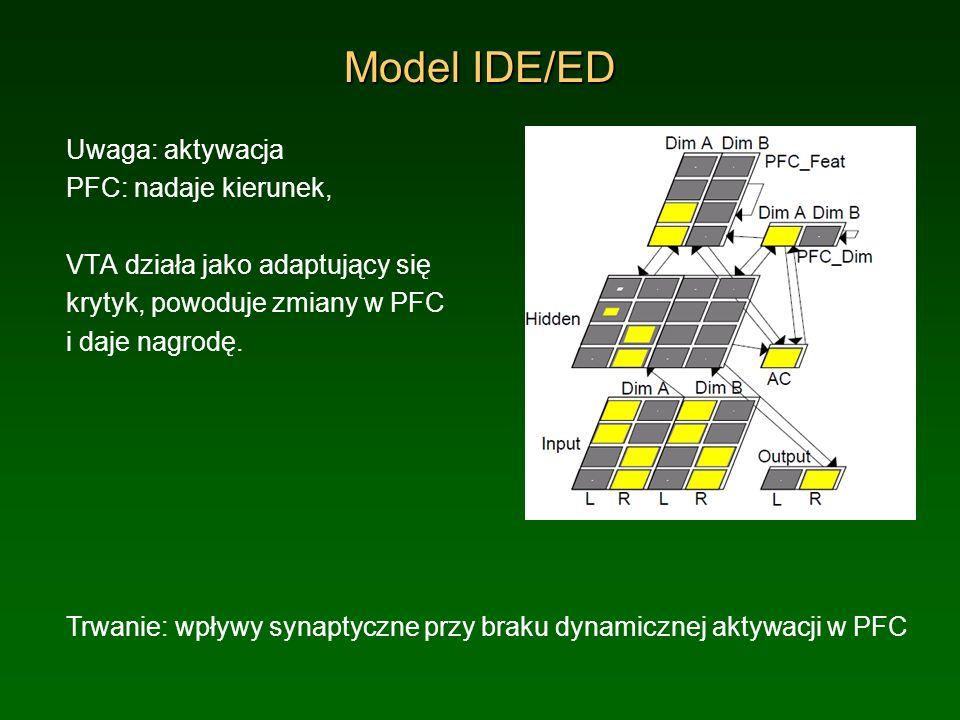 Model IDE/ED Uwaga: aktywacja PFC: nadaje kierunek, VTA działa jako adaptujący się krytyk, powoduje zmiany w PFC i daje nagrodę. Trwanie: wpływy synap