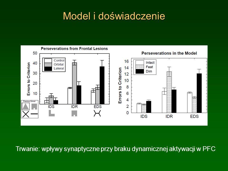 Model i doświadczenie Trwanie: wpływy synaptyczne przy braku dynamicznej aktywacji w PFC