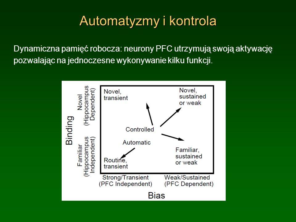 Automatyzmy i kontrola Dynamiczna pamięć robocza: neurony PFC utrzymują swoją aktywację pozwalając na jednoczesne wykonywanie kilku funkcji.