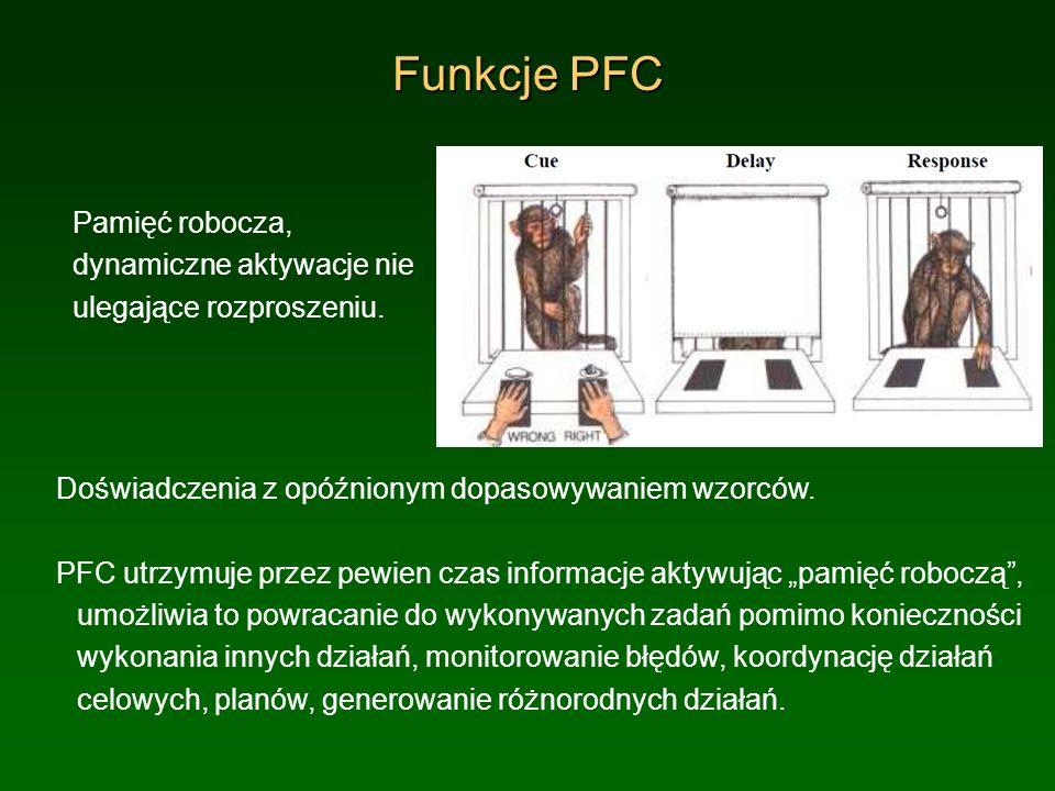Funkcje PFC Pamięć robocza, dynamiczne aktywacje nie ulegające rozproszeniu. Doświadczenia z opóźnionym dopasowywaniem wzorców. PFC utrzymuje przez pe