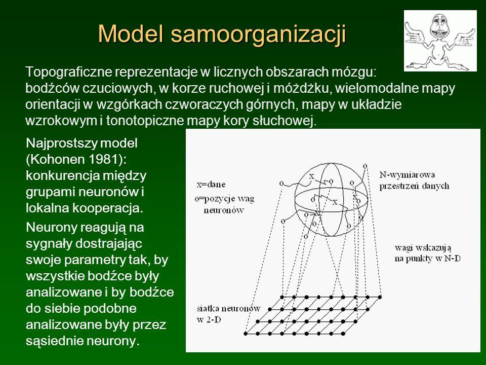 Model samoorganizacji Topograficzne reprezentacje w licznych obszarach mózgu: bodźców czuciowych, w korze ruchowej i móżdżku, wielomodalne mapy orient