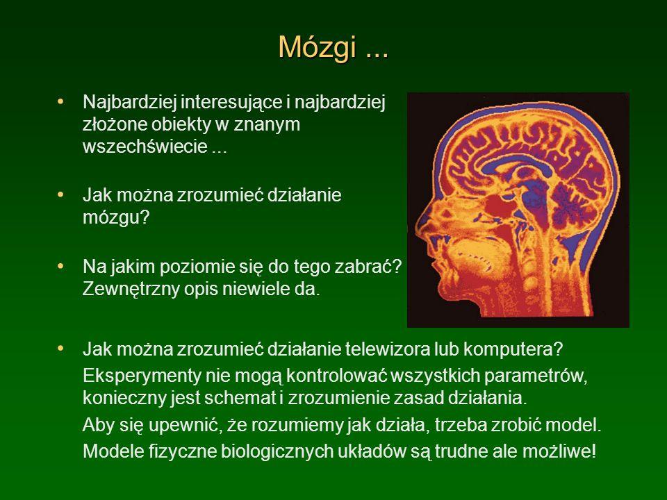 Mózgi... Najbardziej interesujące i najbardziej złożone obiekty w znanym wszechświecie... Jak można zrozumieć działanie mózgu? Na jakim poziomie się d