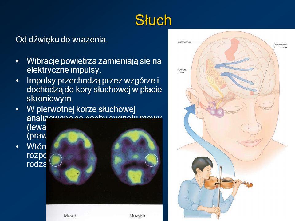 Słuch Od dźwięku do wrażenia. Wibracje powietrza zamieniają się na elektryczne impulsy. Impulsy przechodzą przez wzgórze i dochodzą do kory słuchowej