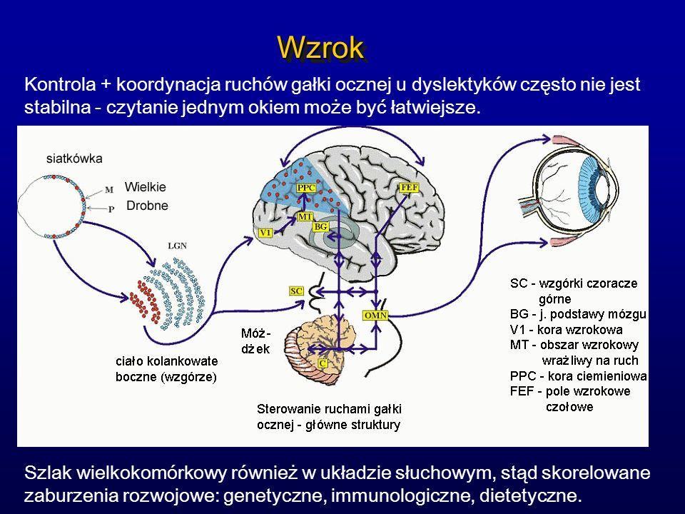 WzrokWzrok Kontrola + koordynacja ruchów gałki ocznej u dyslektyków często nie jest stabilna - czytanie jednym okiem może być łatwiejsze. Szlak wielko