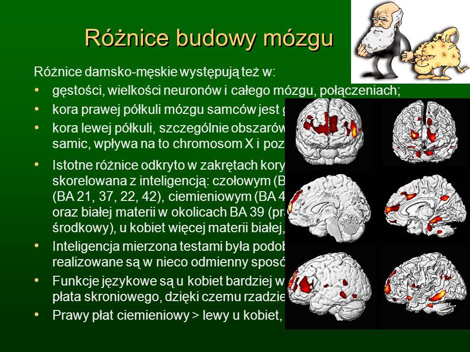 Różnice budowy mózgu Różnice damsko-męskie występują też w: gęstości, wielkości neuronów i całego mózgu, połączeniach; kora prawej półkuli mózgu samcó
