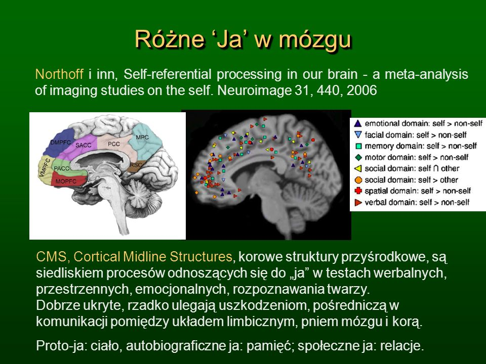 Różne Ja w mózgu Northoff i inn, Self-referential processing in our brain - a meta-analysis of imaging studies on the self. Neuroimage 31, 440, 2006 C