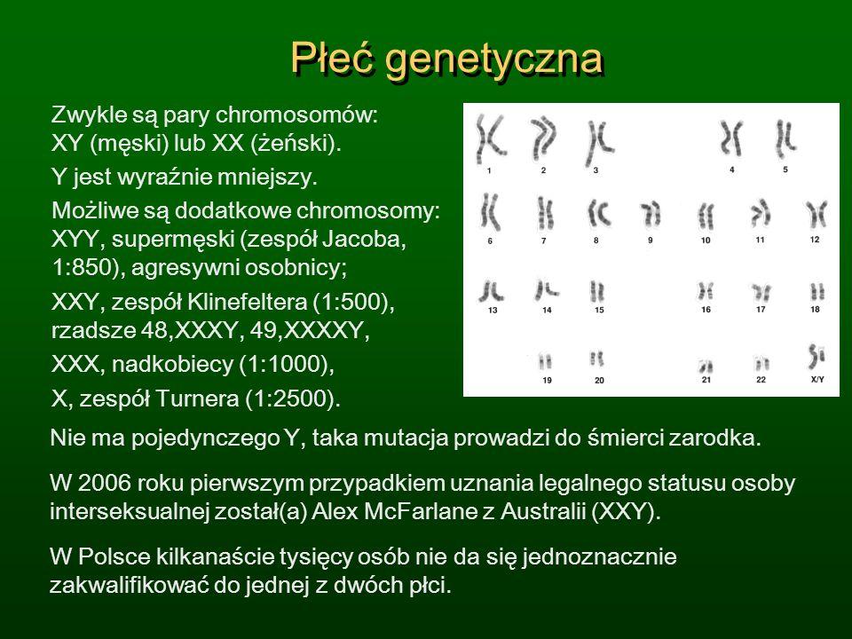 Płeć genetyczna Zwykle są pary chromosomów: XY (męski) lub XX (żeński). Y jest wyraźnie mniejszy. Możliwe są dodatkowe chromosomy: XYY, supermęski (ze