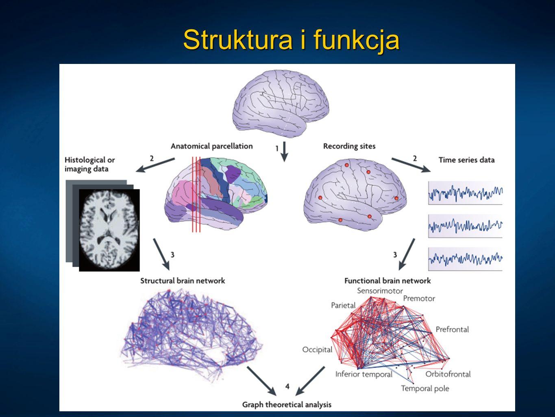 Struktura i funkcja