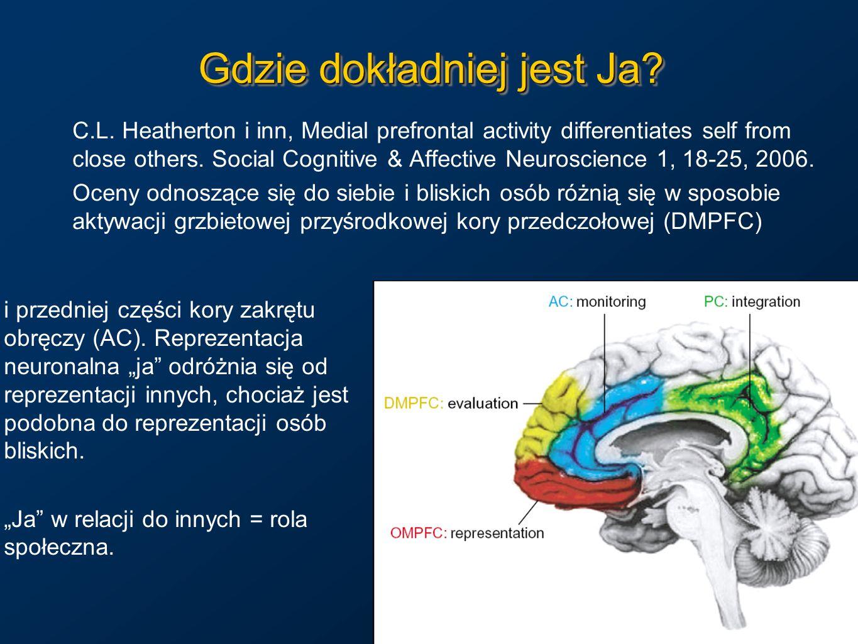 Mózg jako substrat W mózgu są tylko elektryczne impulsy, a nie obrazy czy dźwięki.