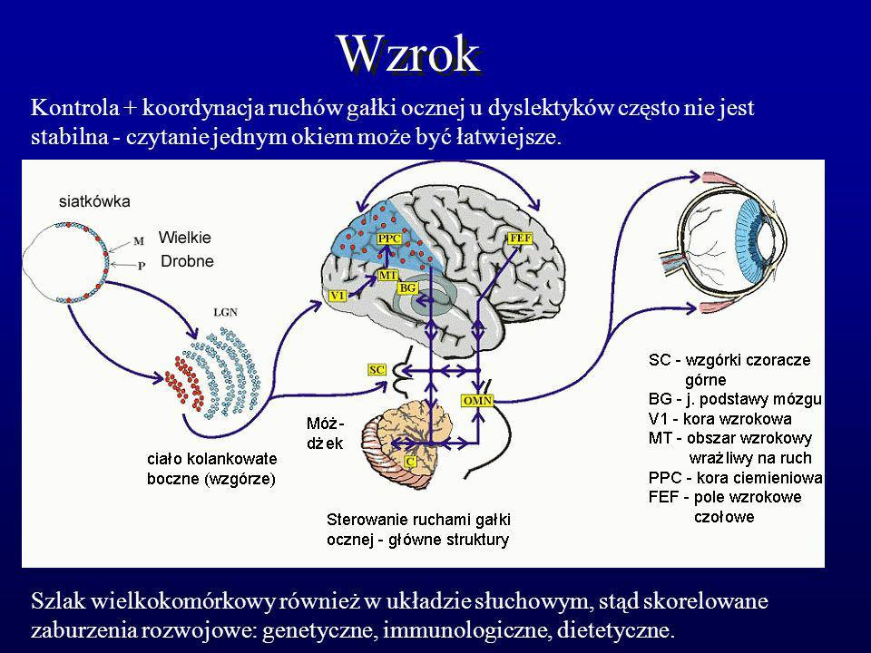 Wzrok Kontrola + koordynacja ruchów gałki ocznej u dyslektyków często nie jest stabilna - czytanie jednym okiem może być łatwiejsze. Szlak wielkokomór