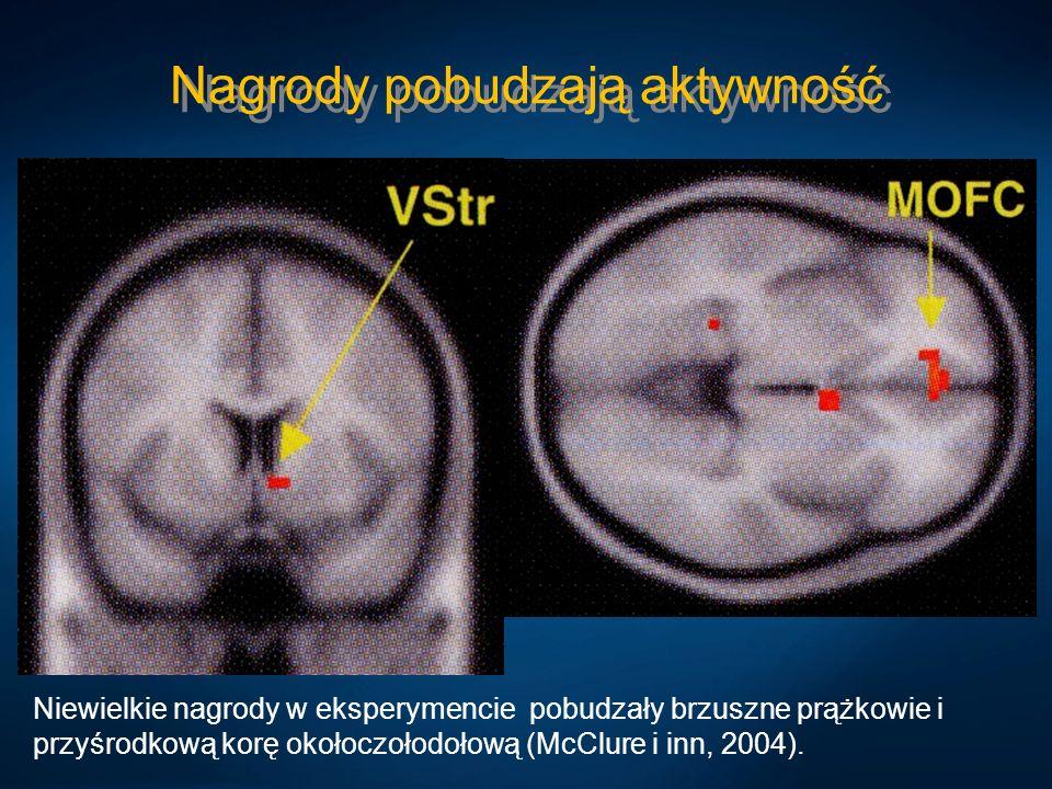 Nagrody pobudzają aktywność Niewielkie nagrody w eksperymencie pobudzały brzuszne prążkowie i przyśrodkową korę okołoczołodołową (McClure i inn, 2004)