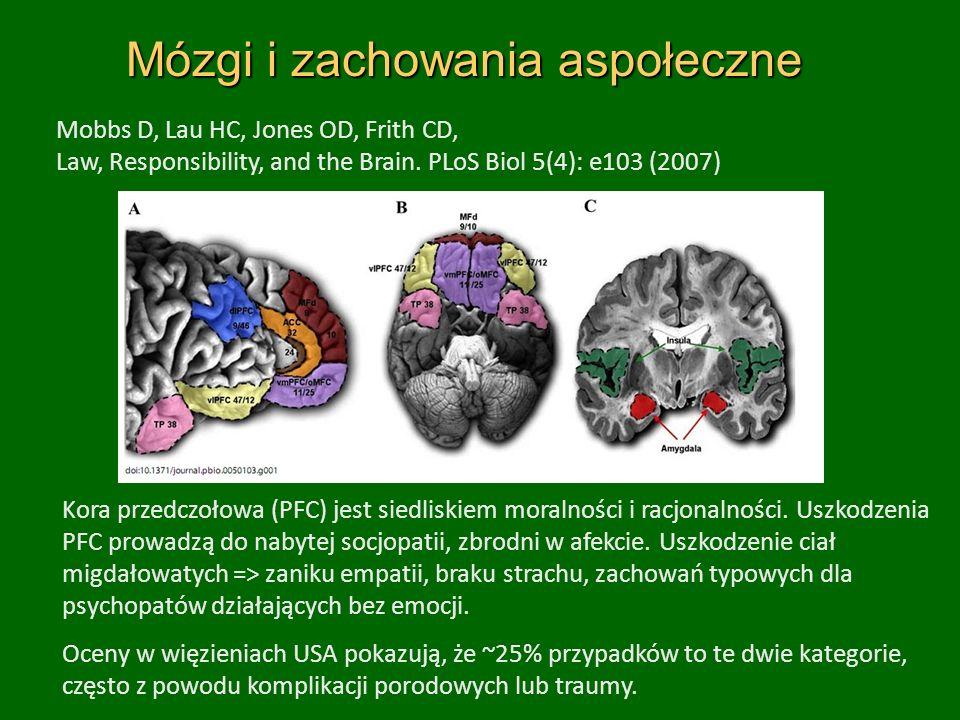 Mózgi i zachowania aspołeczne Mobbs D, Lau HC, Jones OD, Frith CD, Law, Responsibility, and the Brain.