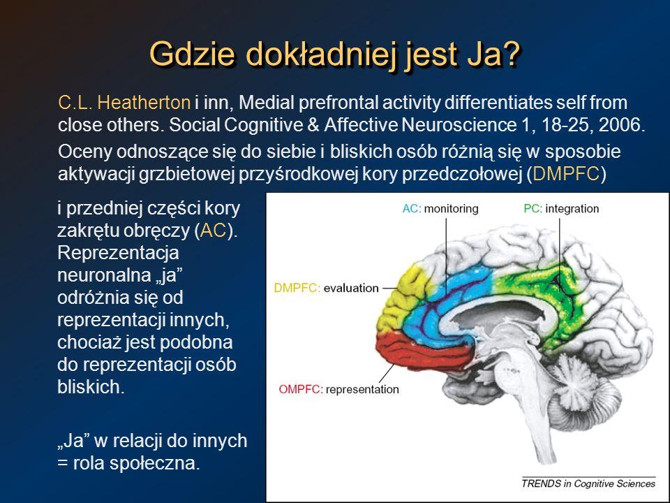 Gdzie dokładniej jest Ja? C.L. Heatherton i inn, Medial prefrontal activity differentiates self from close others. Social Cognitive & Affective Neuros