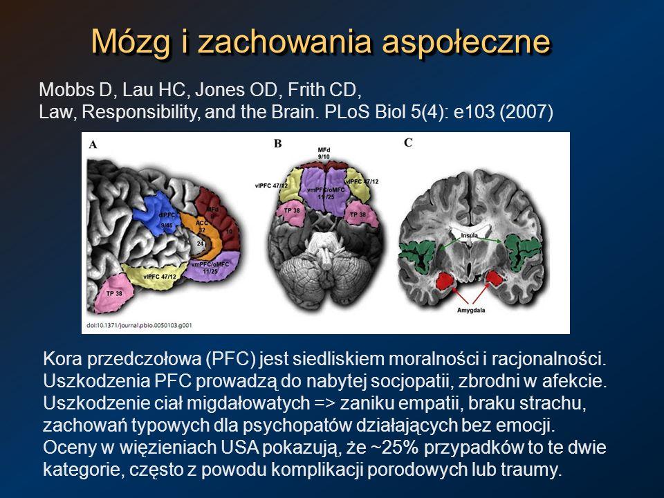 Mózg i zachowania aspołeczne Mobbs D, Lau HC, Jones OD, Frith CD, Law, Responsibility, and the Brain. PLoS Biol 5(4): e103 (2007) Kora przedczołowa (P