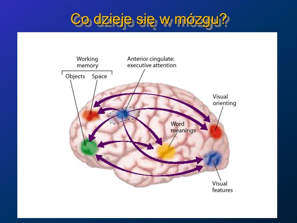 Wglądy i mózgi Można badać aktywność mózgu w czasie rozwiązywania problemów, które wymagają wglądu lub które rozwiązywane są schematycznie.