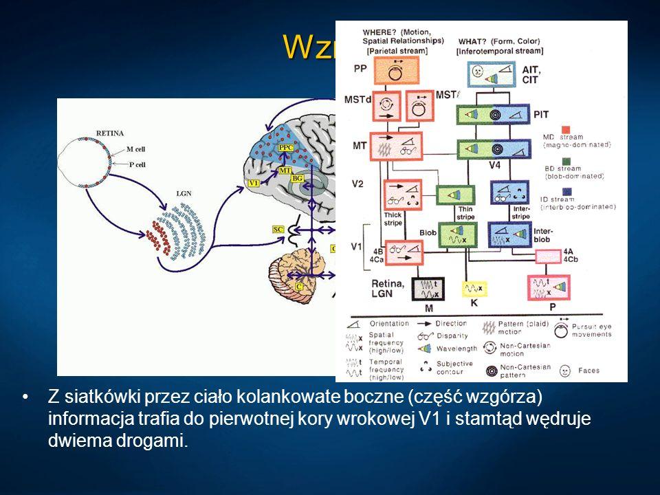 Architektura mózgopodobna Stany mózgu są czasoprzestrzennymi rozkładami pobudzeń tkanki neuronów.