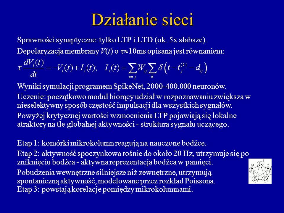 Działanie sieci Sprawności synaptyczne: tylko LTP i LTD (ok. 5x słabsze). Depolaryzacja membrany V(t) o 10ms opisana jest równaniem: Wyniki symulacji