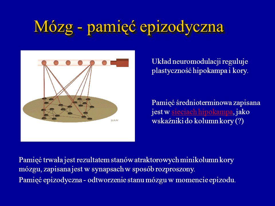 Mózg - pamięć epizodyczna Pamięć trwała jest rezultatem stanów atraktorowych minikolumn kory mózgu, zapisana jest w synapsach w sposób rozproszony. Pa