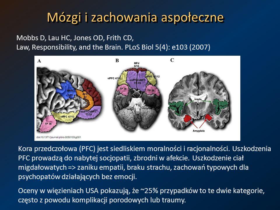 Mózgi i zachowania aspołeczne Mobbs D, Lau HC, Jones OD, Frith CD, Law, Responsibility, and the Brain. PLoS Biol 5(4): e103 (2007) Kora przedczołowa (