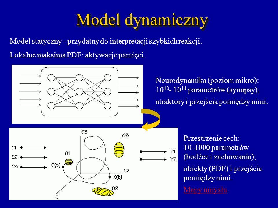 Model dynamiczny Model statyczny - przydatny do interpretacji szybkich reakcji. Lokalne maksima PDF: aktywacje pamięci. Neurodynamika (poziom mikro):