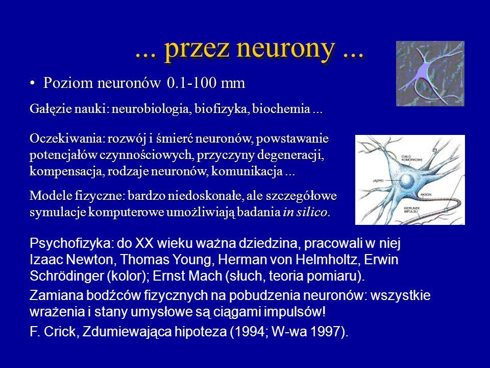 ... przez neurony... Poziom neuronów 0.1-100 mm Poziom neuronów 0.1-100 mm Gałęzie nauki: neurobiologia, biofizyka, biochemia... Psychofizyka: do XX w
