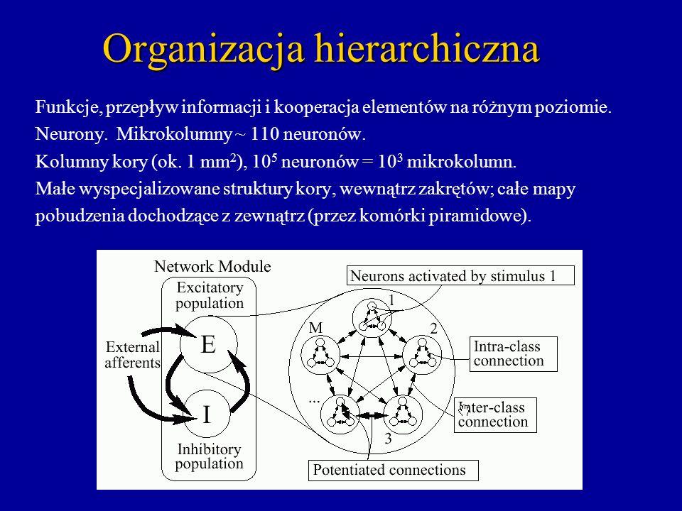 Organizacja hierarchiczna Funkcje, przepływ informacji i kooperacja elementów na różnym poziomie. Neurony. Mikrokolumny ~ 110 neuronów. Kolumny kory (