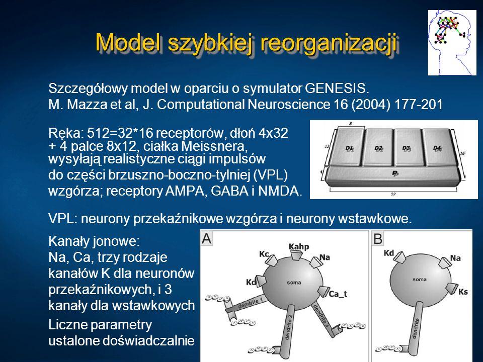 Model szybkiej reorganizacji Szczegółowy model w oparciu o symulator GENESIS. M. Mazza et al, J. Computational Neuroscience 16 (2004) 177-201 Ręka: 51