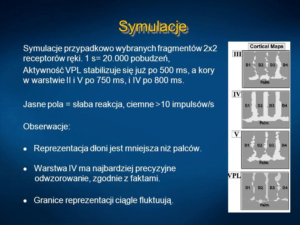 SymulacjeSymulacje Symulacje przypadkowo wybranych fragmentów 2x2 receptorów ręki. 1 s= 20.000 pobudzeń, Aktywność VPL stabilizuje się już po 500 ms,
