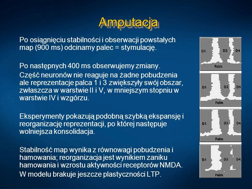 AmputacjaAmputacja Po osiągnięciu stabilności i obserwacji powstałych map (900 ms) odcinamy palec = stymulację. Po następnych 400 ms obserwujemy zmian