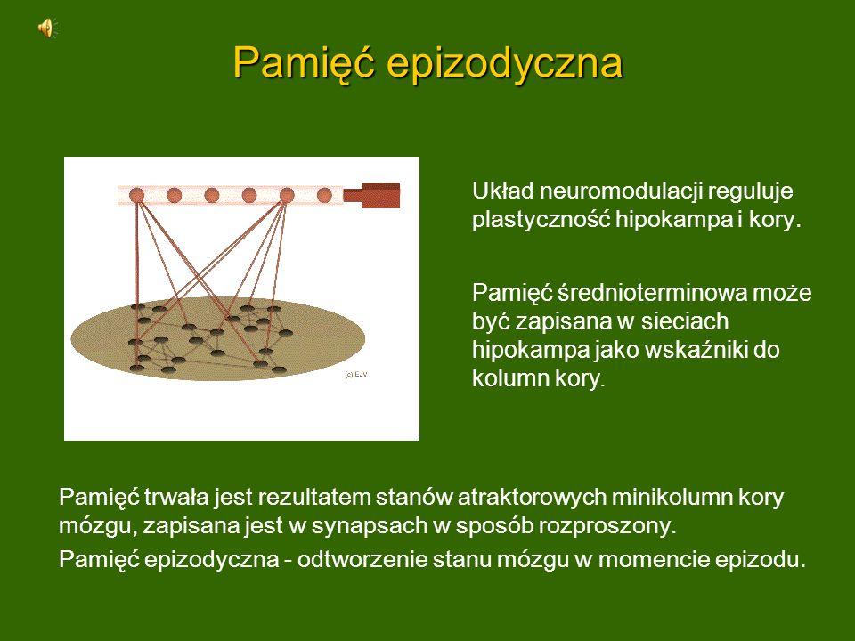 Pamięć epizodyczna Pamięć trwała jest rezultatem stanów atraktorowych minikolumn kory mózgu, zapisana jest w synapsach w sposób rozproszony. Pamięć ep