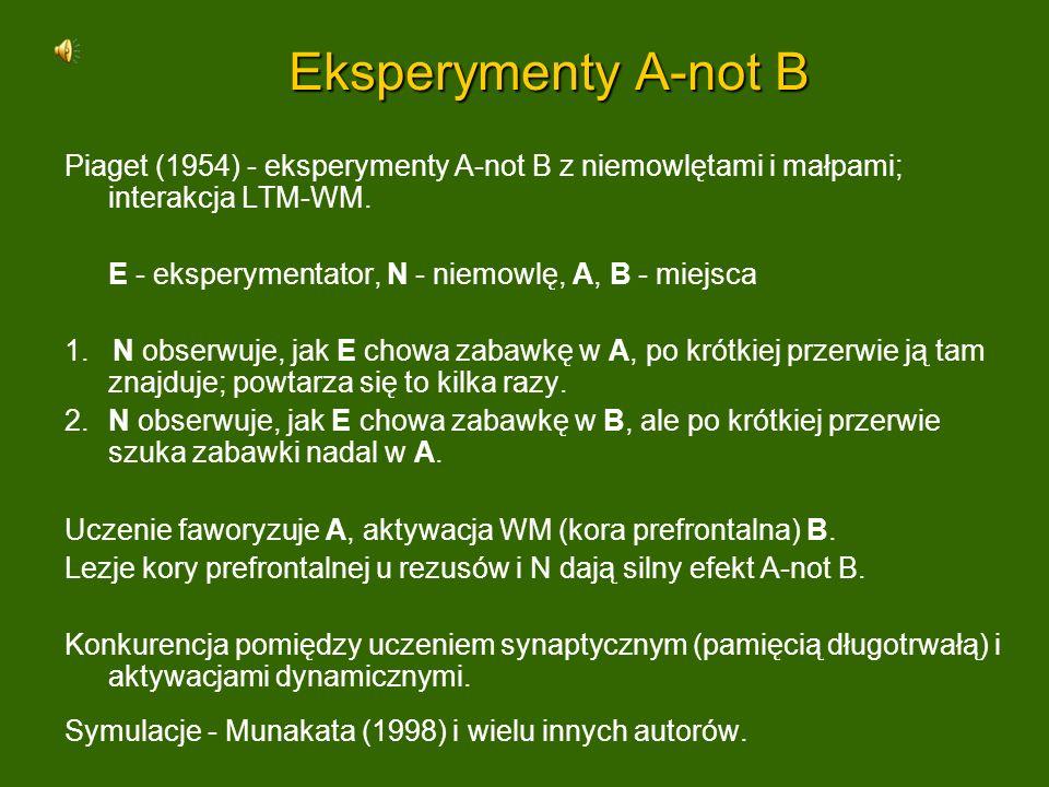 Eksperymenty A-not B Piaget (1954) - eksperymenty A-not B z niemowlętami i małpami; interakcja LTM-WM. E - eksperymentator, N - niemowlę, A, B - miejs