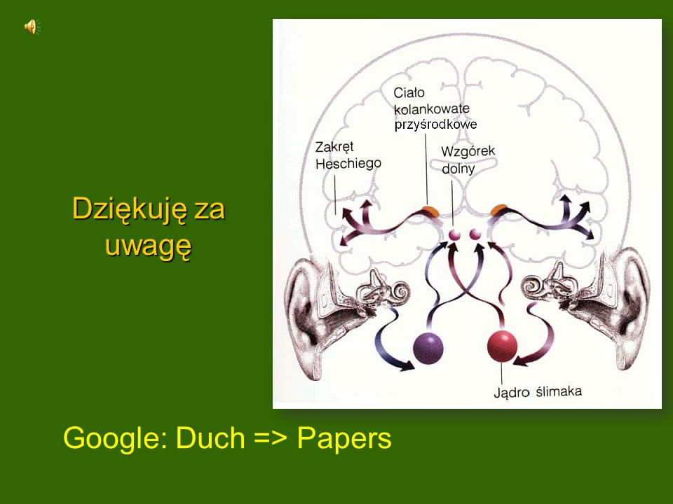 Dziękuję za uwagę Google: Duch => Papers