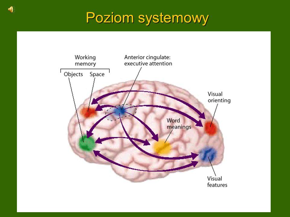 Pamięć robocza Pamięć robocza (WM) jest aktywna, konieczna by powstały wrażenia świadome, jest oparta na chwilowych stanach wielostabilnego układu.