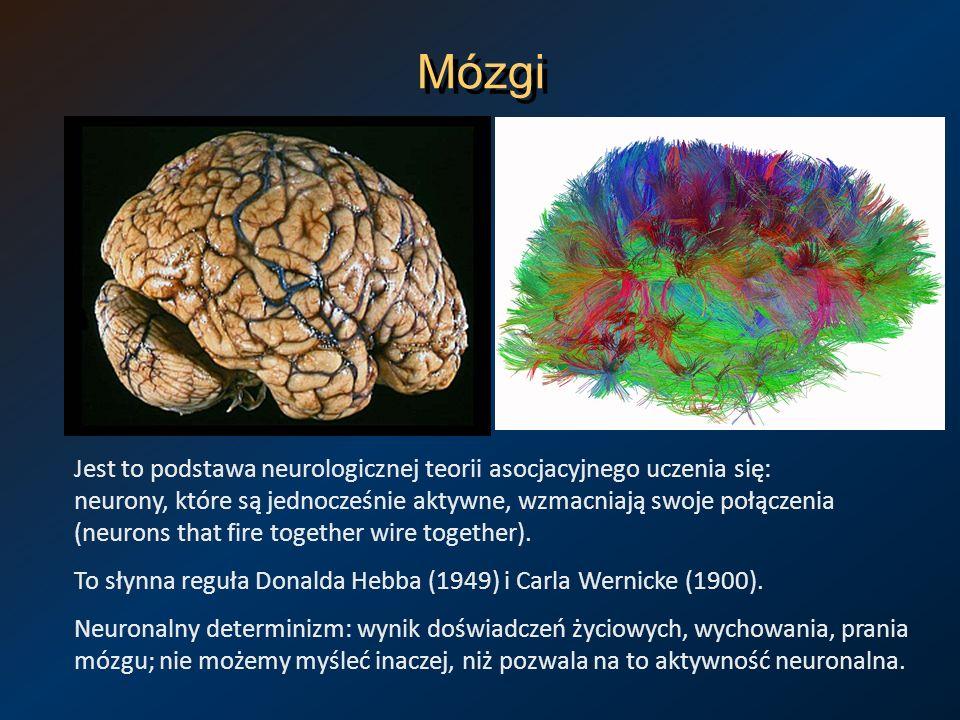 Mózgi Jest to podstawa neurologicznej teorii asocjacyjnego uczenia się: neurony, które są jednocześnie aktywne, wzmacniają swoje połączenia (neurons t