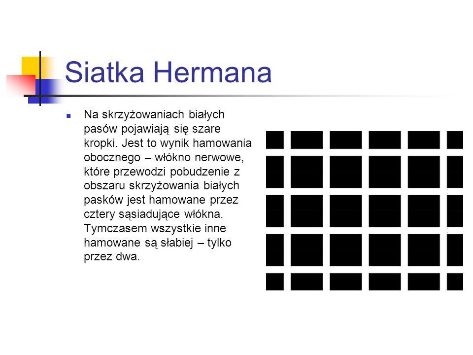 Siatka Hermana Na skrzyżowaniach białych pasów pojawiają się szare kropki. Jest to wynik hamowania obocznego – włókno nerwowe, które przewodzi pobudze