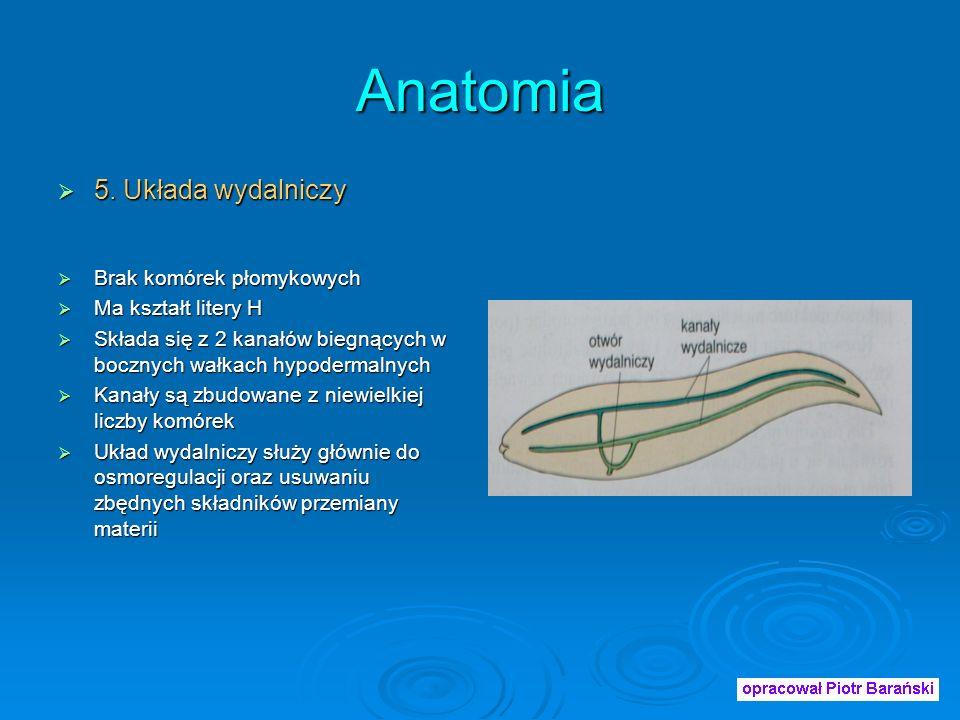 Anatomia 5.Układa wydalniczy 5.