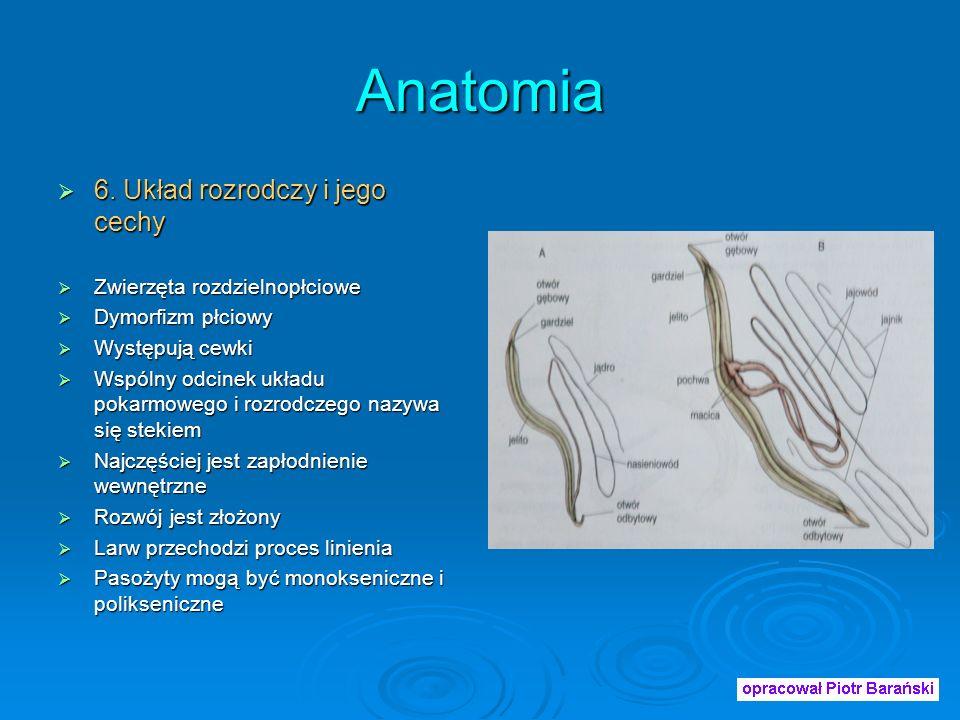 Anatomia 6.Układ rozrodczy i jego cechy 6.