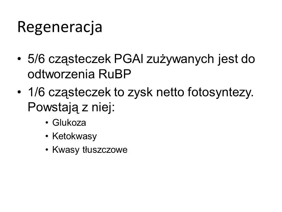Fotosynteza roślin C i C U roślin, których akceptorem CO jest RuBP nazwano roślinami C U roślin stref zwrotnikowych akceptorem CO jest fofsoenolopirogronian (PEP) (zw.