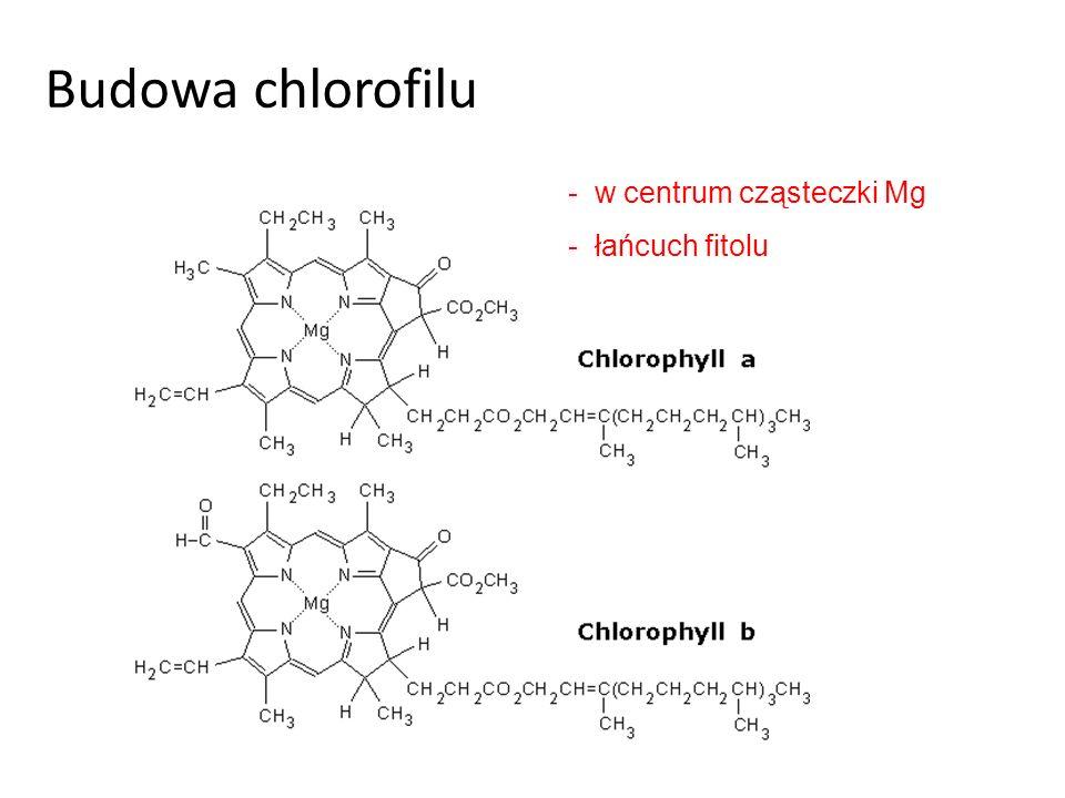 Wpływ czynników na fotosyntezę Czynniki endogenne (wewnętrzne) Ilość i rozmieszczenie aparatów szparkowych Czynniki egzogenne (zewnętrzne) Światło (heliofity- światłolubne, skiofity- cieniolubne) Temperatura (25 C-35 C) Stężenie CO Ilość wody Pierwiastki mineralne