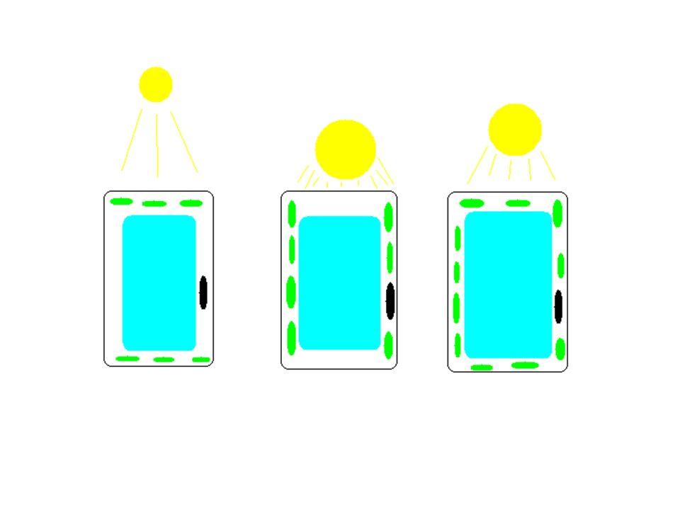 Chemosynteza Zachodzi bez energii świetlnej Ma istotne znaczenie w cyklach bigeochemicznych