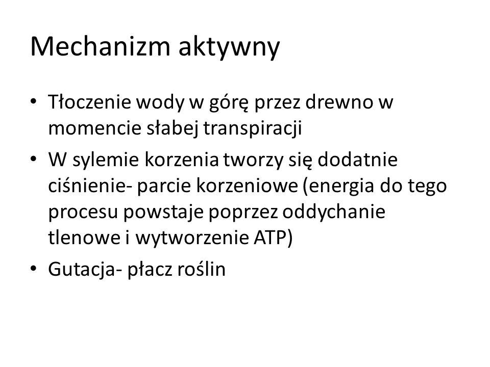c) Transport w liściu Transpiracja Transpiracja kutikularna- im grubsza kutukula tym słabsza transpiracja Transpiracja szparkowa: Otwarcie a.