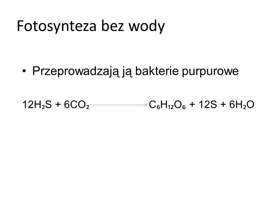 Fazy fotosyntezy: Jasna (zależna od światła)- faza przemiany energii Zachodzi w błonach tylakoidów gran plastydów –Dochodzi do pobudzenia fotosystemu PSI i wybicia z niego elektronów, które przenoszone są przez NADP+ i przyjmuje postać NADPH.