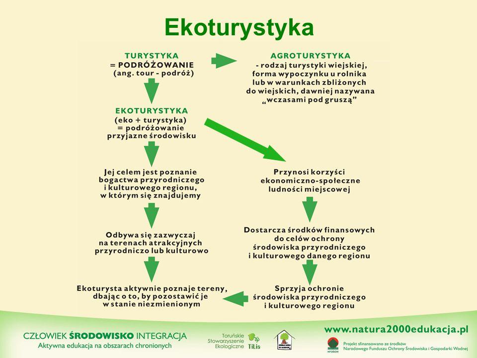 Ekologiczna hierarchia sposobów przemieszczania się