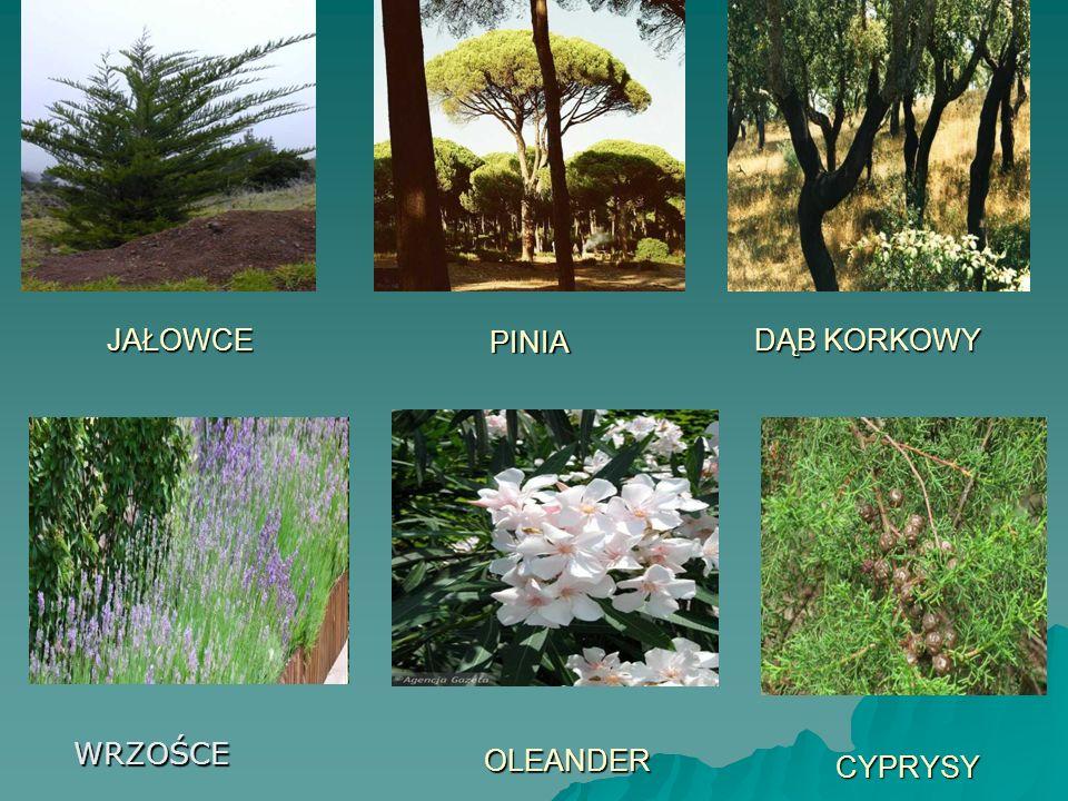 Makia- to wtórna formacja roślinna występująca w wilgotniejszych siedliskach w rejonie śródziemnomorskim.