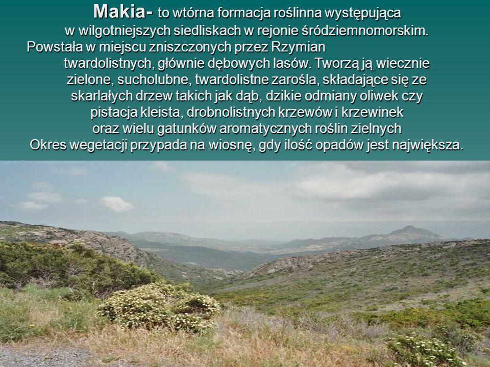Makia- to wtórna formacja roślinna występująca w wilgotniejszych siedliskach w rejonie śródziemnomorskim. Powstała w miejscu zniszczonych przez Rzymia